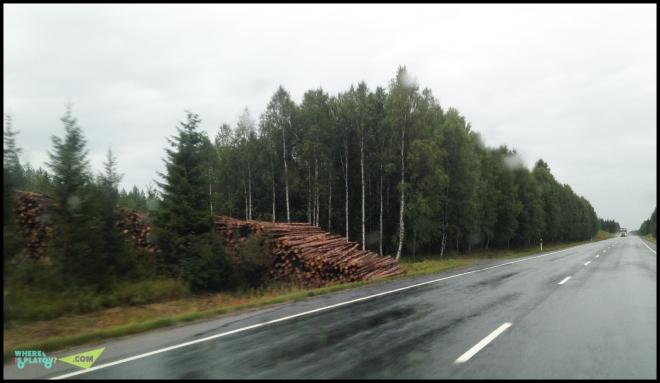 Лесозаготовки повсюду вдоль дорог.